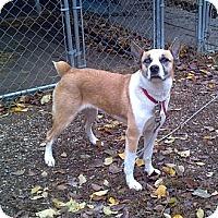 Adopt A Pet :: Cleo - Geneseo, IL