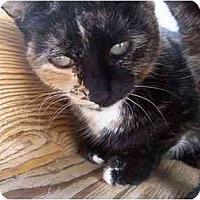 Adopt A Pet :: Julie - El Cajon, CA