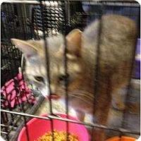 Adopt A Pet :: Molly - Mobile, AL