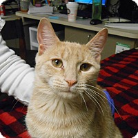 Adopt A Pet :: Regina - Maywood, NJ