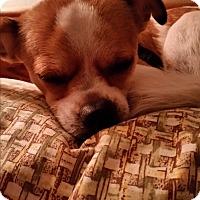 Adopt A Pet :: Schultz - Pinellas Park, FL