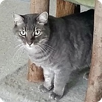 Adopt A Pet :: Covenant - Mountain Center, CA