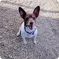 Adopt A Pet :: SUZIE Q - Coudersport, PA