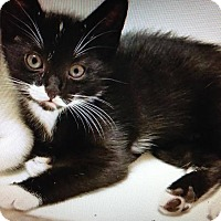 Adopt A Pet :: Siren - East Brunswick, NJ