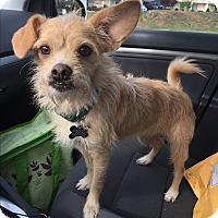 Adopt A Pet :: Winchester - MEET ME - Norwalk, CT