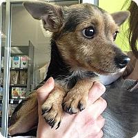 Adopt A Pet :: Doby - Pompton Lakes, NJ