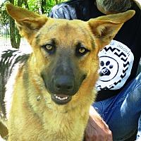 Adopt A Pet :: Rio - Godley, TX