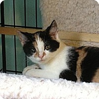 Adopt A Pet :: Chelsea - Richfield, OH