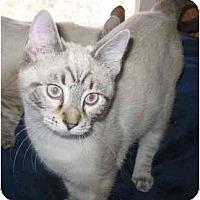 Adopt A Pet :: Gomer kitten - Cincinnati, OH
