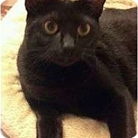 Adopt A Pet :: Prancess - Moses Lake, WA