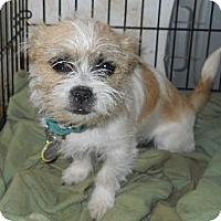 Adopt A Pet :: Norman - dewey, AZ