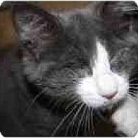 Adopt A Pet :: Shira - Markham, ON