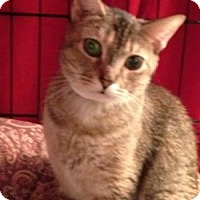 Adopt A Pet :: Chloe-Loving, Gentle - East Hanover, NJ