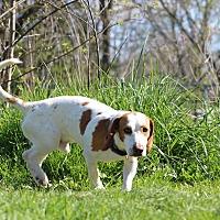 Adopt A Pet :: Charlie - Pleasant Plain, OH