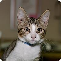 Adopt A Pet :: Jacque - Medina, OH