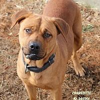 Adopt A Pet :: Charlotte - Camden, DE
