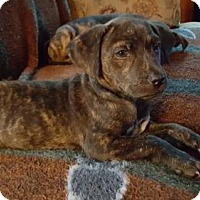 Adopt A Pet :: Joanne - Westminster, MD
