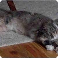Adopt A Pet :: Snarf - New York, NY