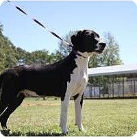 Adopt A Pet :: Coby - Staunton, VA