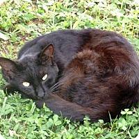 Adopt A Pet :: Rainbow - Nolensville, TN