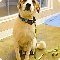 Shepherd (Unknown Type) Mix Dog for adoption in Poteau, Oklahoma - RALPHIE