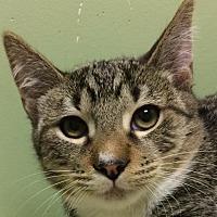 Adopt A Pet :: Shane aka Wishbone - Auburn, CA