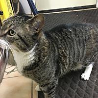 Adopt A Pet :: Bizzy - Saylorsburg, PA
