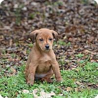Adopt A Pet :: Player - Groton, MA