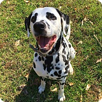 Adopt A Pet :: Patch - Lafayette, IN