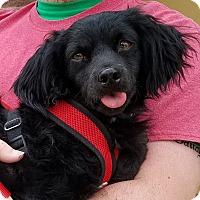 Adopt A Pet :: Zero - Phoenix, AZ