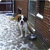 Adopt A Pet :: Phoebe - Detroit, MI