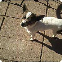 Adopt A Pet :: Pita - Alliance, NE