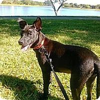 Adopt A Pet :: Millie - Miami, FL