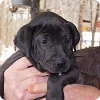 Adopt A Pet :: Max - Cranford, NJ