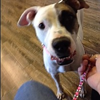 Adopt A Pet :: Daphne - Crestview, FL