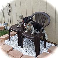 Adopt A Pet :: Laney~ADOPTION PENDING - Sharonville, OH