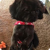 Adopt A Pet :: RICKY-pending - Eden Prairie, MN