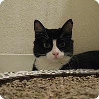 Adopt A Pet :: GEISHA - Brea, CA