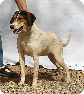 Treeing Walker Coonhound Mix Dog for adoption in Ashland, Alabama - Thelma