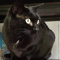 Adopt A Pet :: Xena - Stroudsburg, PA