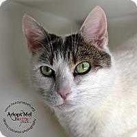 Adopt A Pet :: Veera - Lyons, NY