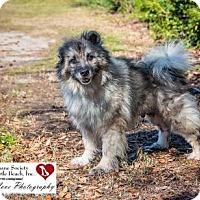Adopt A Pet :: Sir Edward - North Myrtle Beach, SC