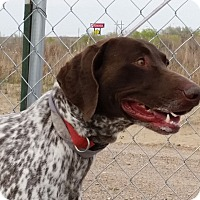 Adopt A Pet :: Amadeus - Sterling, CO