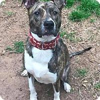 Adopt A Pet :: Rock - Charlotte, NC
