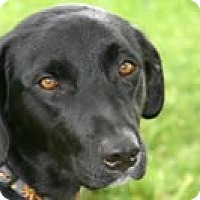 Adopt A Pet :: FOSTER HOMES NEEDED - Avon, NY