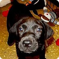 Adopt A Pet :: Dodger - Silsbee, TX