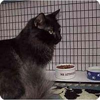 Adopt A Pet :: Murry & Maizie - Deerfield Beach, FL