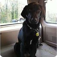 Adopt A Pet :: Jett - Windham, NH