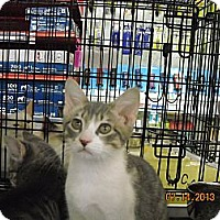 Adopt A Pet :: Hunter - Riverside, RI