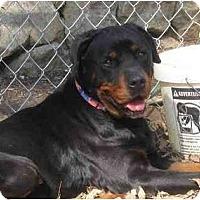 Adopt A Pet :: Romy - Chandler, IN